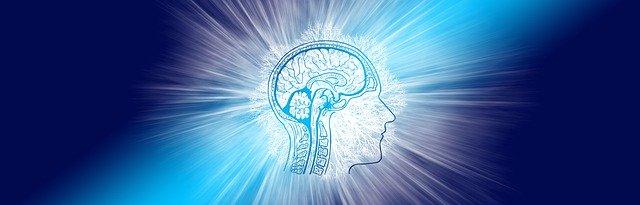 Cerveau illuminé de blanc