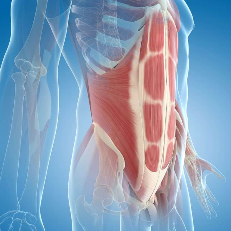 Sangle abdominale renforcée avec la corde ondulatoire
