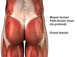 Les muscles fessiers (image Google)